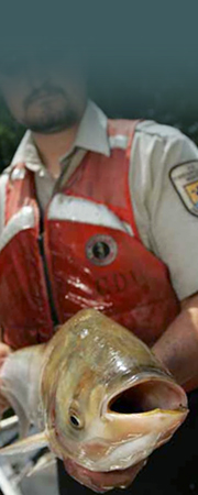 Conservation Officer with bighead carp